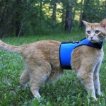 Alpine Lake Cat Harness