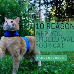 10 Reasons Why You Should Walk Your Cat